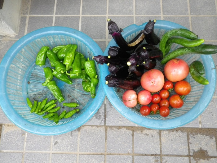 収穫1_15_07_06