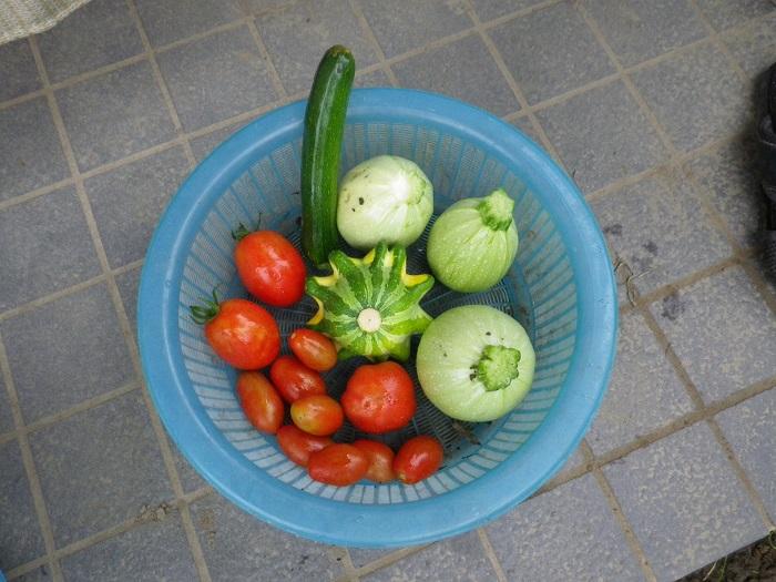 収穫2_15_07_06