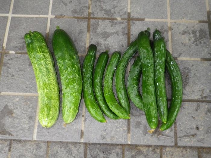 収穫3_15_07_09