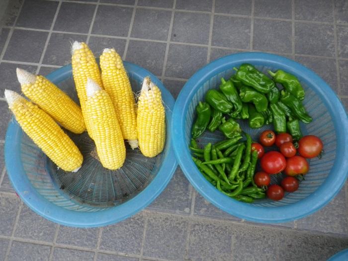 収穫2_15_07_10