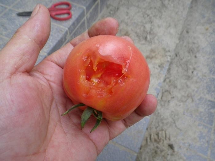 収穫2_15_07_11