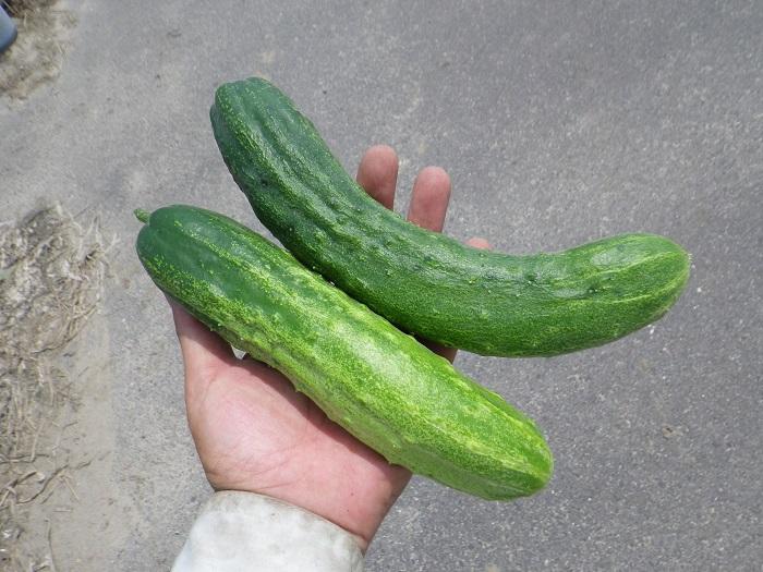 収穫6_15_07_11