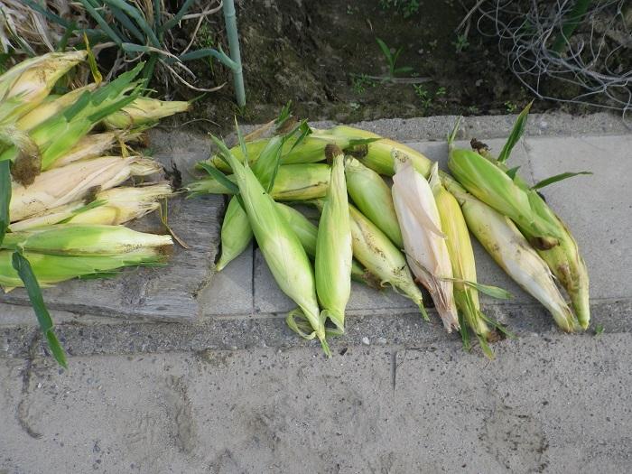 収穫10_15_07_11