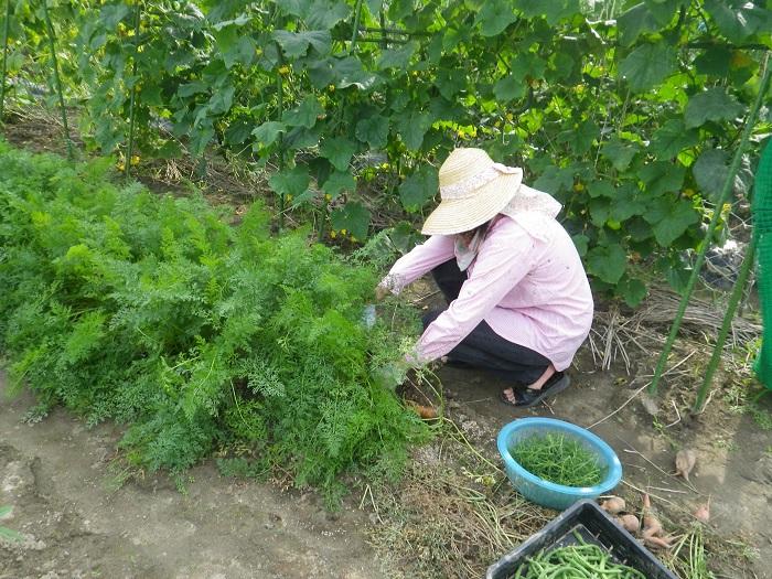 収穫12_15_07_11