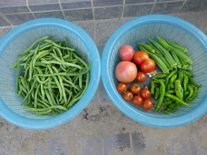 収穫2_15_07_12