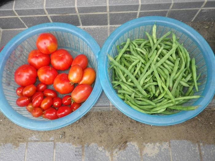 収穫2_15_07_17