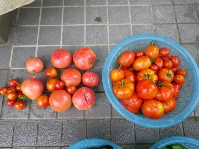 収穫2_15_07_18