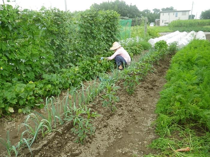 収穫中15_07_19