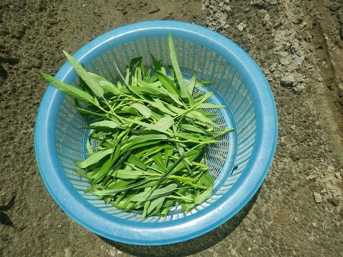 収穫2_15_07_20