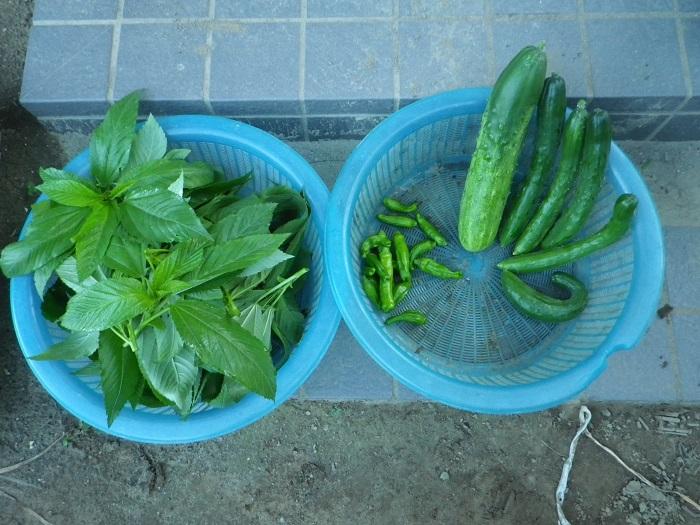 収穫2_15_07_21