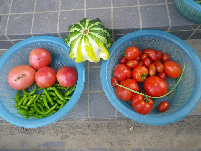 収穫2_15_07_22