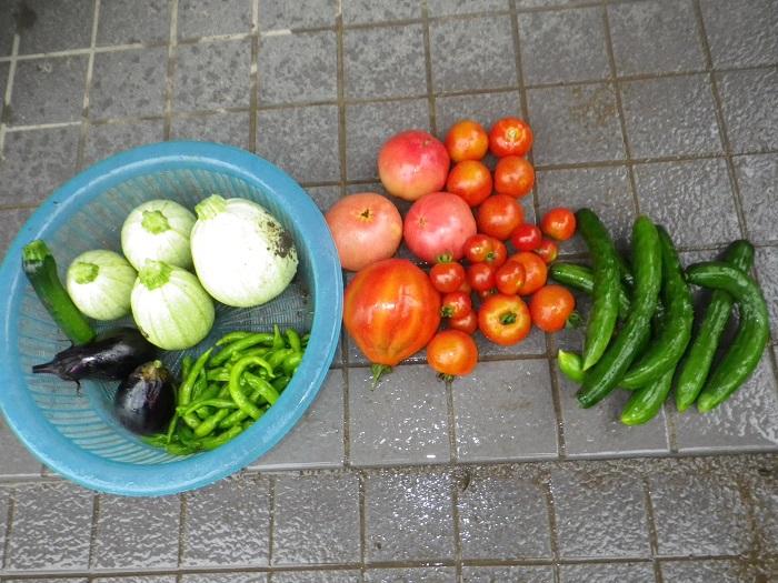 収穫15_07_23
