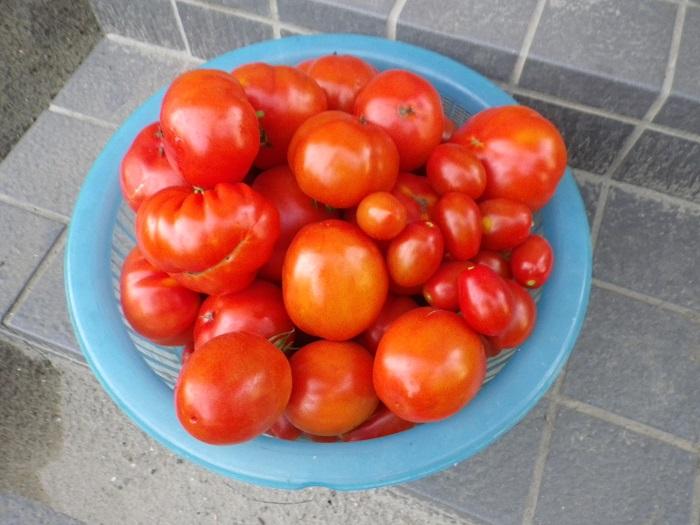 収穫2_15_07_25