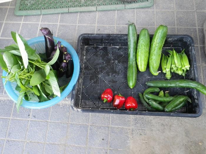 収穫1_15_07_26