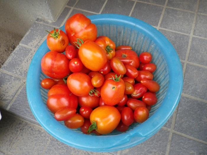 収穫3_15_07_29