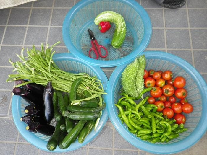 収穫12_07_30