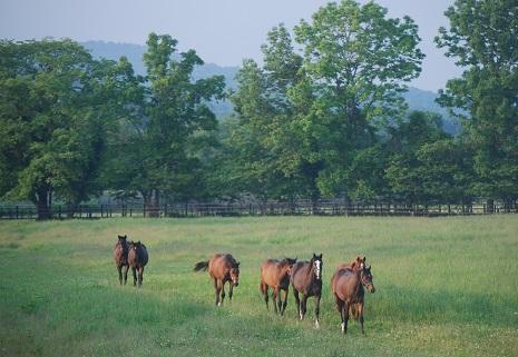 6・牝・馬の道