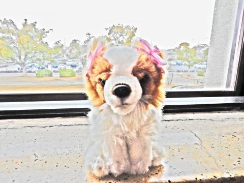 犬(豊郷)