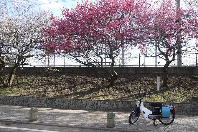 2015_0312戸田別館 0035