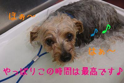 DSC_3487.jpg
