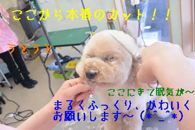 DSC_3668.jpg