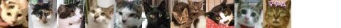 150709-cats