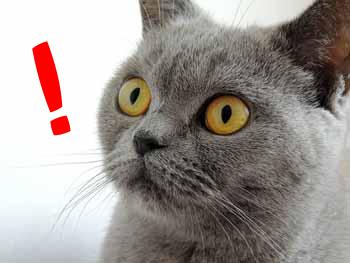 cat-179842_640のコピー