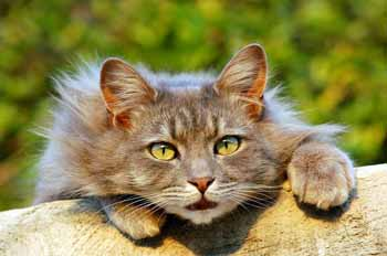 cat-401124_640.jpg