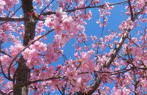 3-12桜