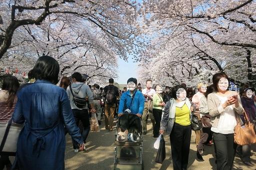 4-5ふるうた桜