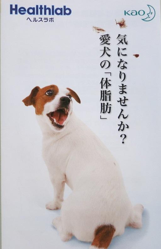 4-10広告②