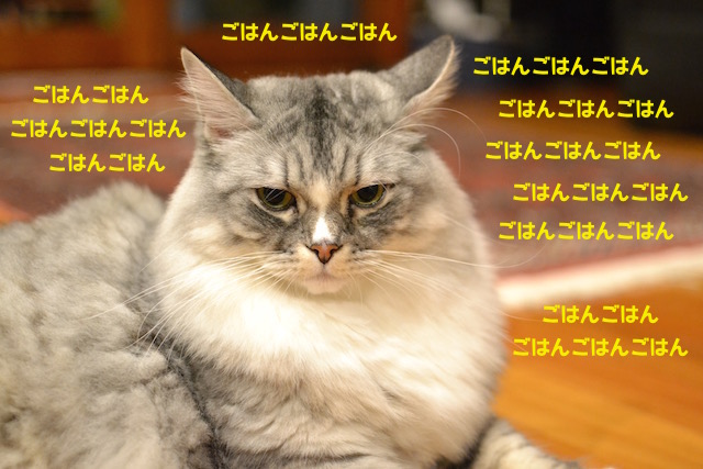 suchan_2015050119423513f.jpg