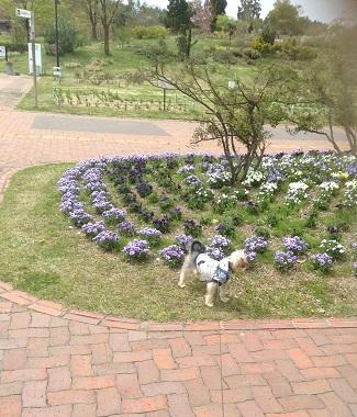 お花とゴン③