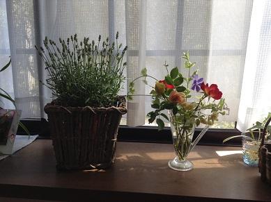 庭の花たち、窓辺に飾るね^^