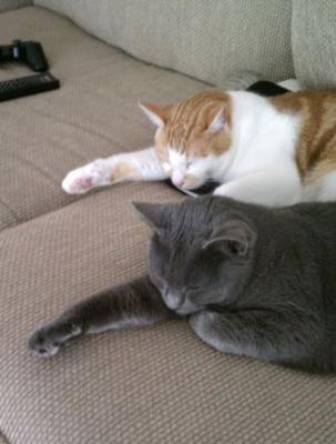 ウトウトしつつも猫の手を貸そうとする