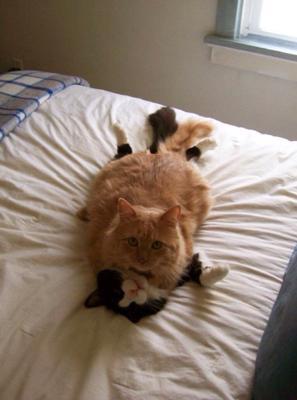 ネコみを襲う
