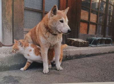 「あの犬どこいった?」「あの猫どこいきやがった!」