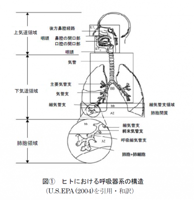 gosenshi2014122504