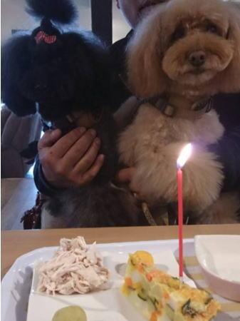 うららちゃんお誕生日