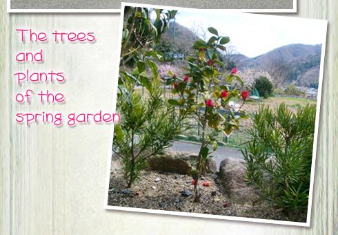 庭先の春 椿