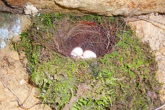 鳥の巣 なんて鳥?