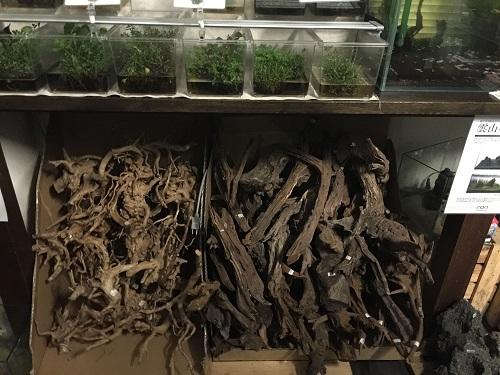 ブランチウッド、ホーンウッド 東海 岐阜 熱帯魚 水草 観葉植物販売 Grow aquarium