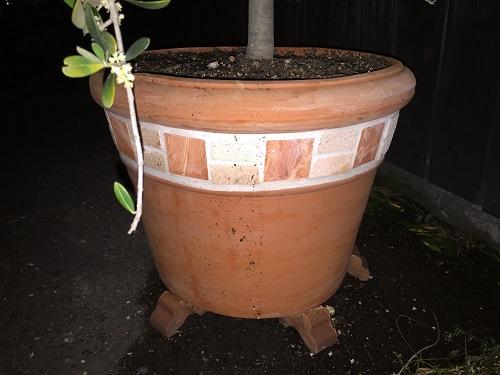 植木鉢復元・・w  東海 岐阜 熱帯魚 水草 観葉植物販売 Grow aquarium