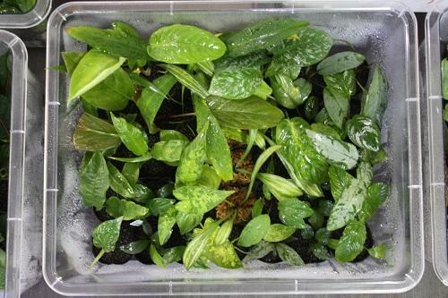 アクアリウムバス 植物