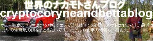 世界のナカモトさんブログ