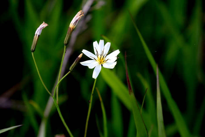 不明白い花