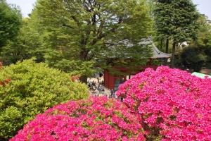 2015根津神社 (17)