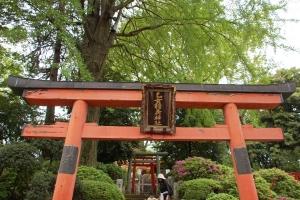 2015根津神社 (14)