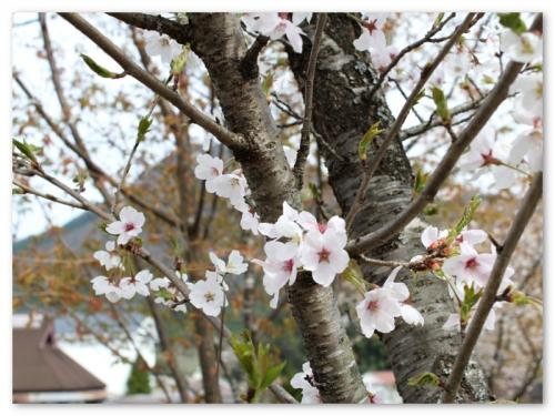 harutabi201505_convert_20150421133234.jpg