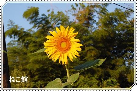 blog_20150727094027996.jpg